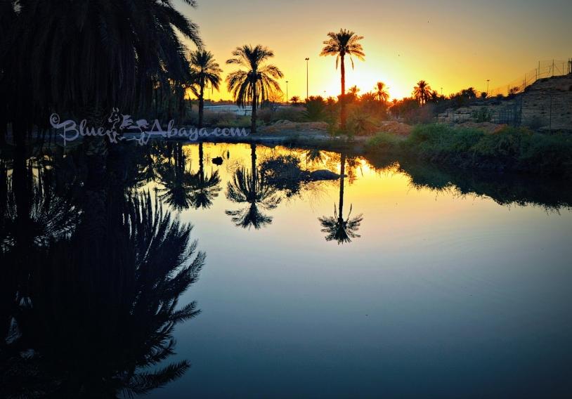 palmtree sunset wadi hanifa lake