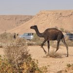 Tuesday Ten From Saudi-Edge of the World and more