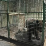 Horror Zoo Update- Saudi Contempt For Animals