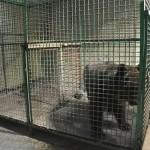Horror Zoo Update- Saudi Contempt For Animals