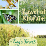 The King's Forest- Rawdat Khuraim