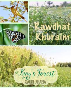 The King's Forest- Rawdat Khuraim