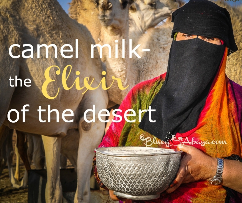 camel milk, the elixir of the desert