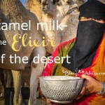 Camel Milk- An Elixir from the Desert