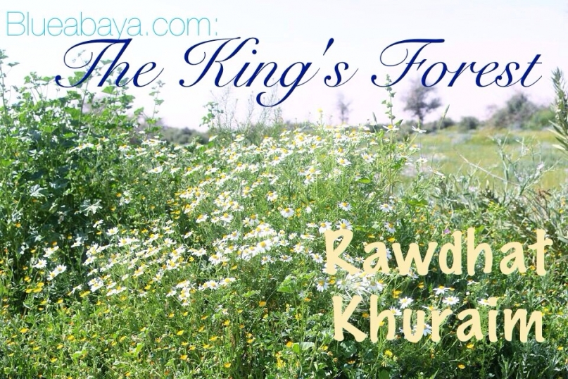 rawdhat kuraim kings forest saudi arabia