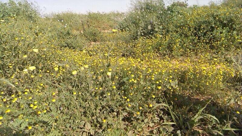 rawdat khuraim flowers