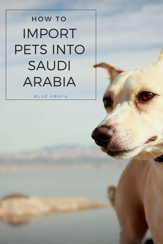 HOW TO IMPORT PETS INTO KSA