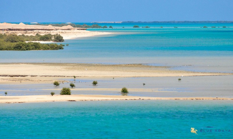 mangroves on Farasan Island beach Saudi Arabia