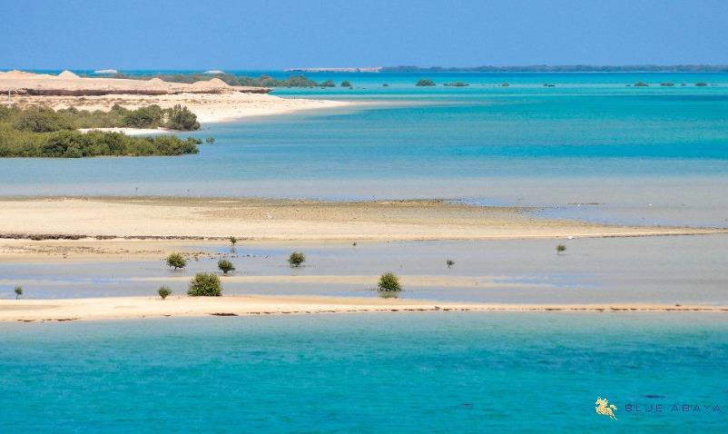 mangroves Farasan Islands beach Saudi Arabia