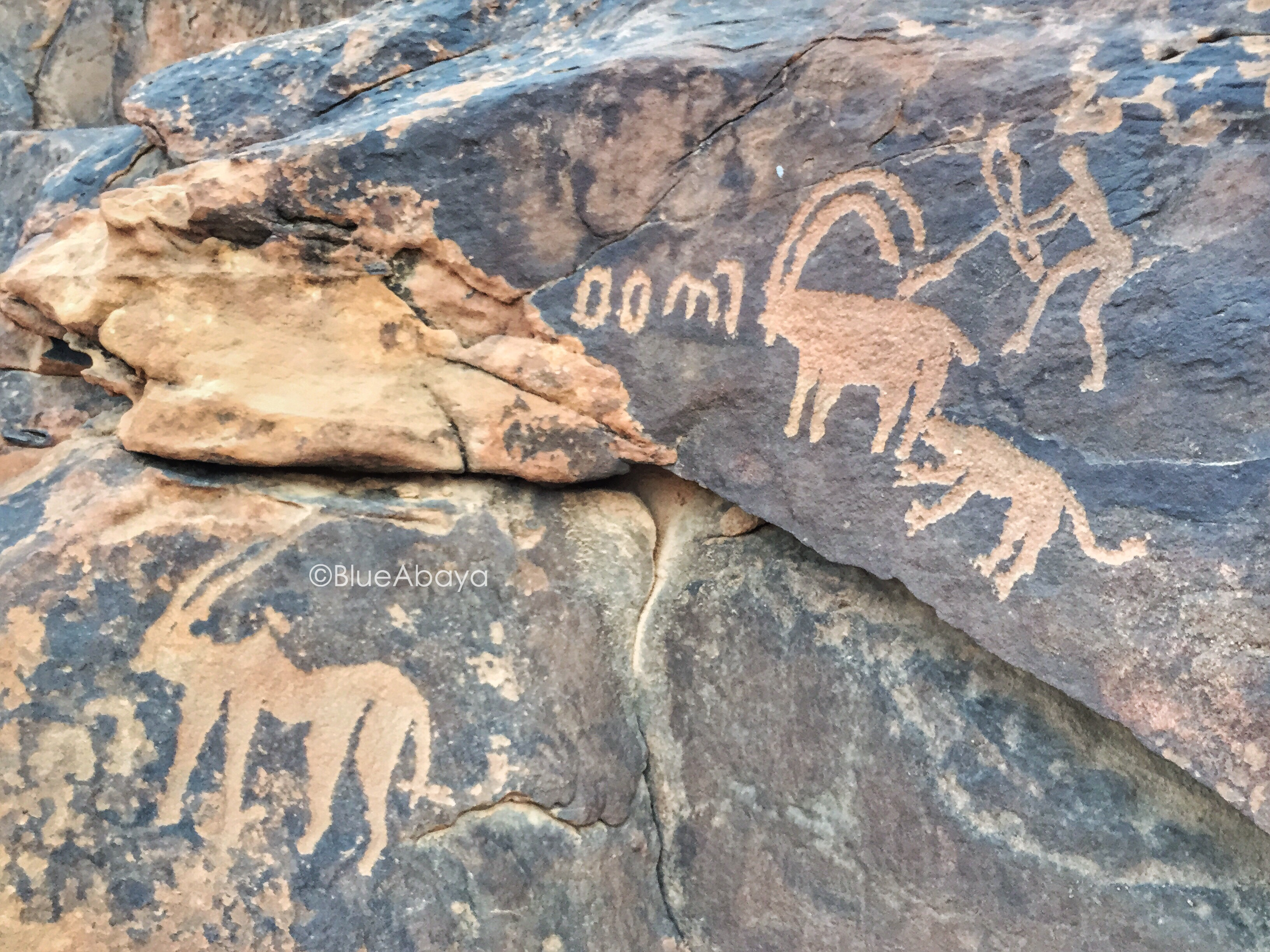 Wanderlust in saudi arabia ha il archeological rock art