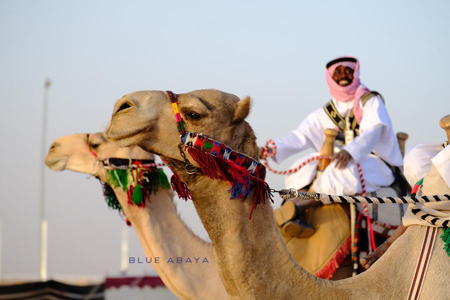 Image result for Saudi camel festival
